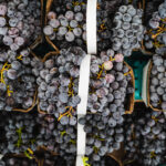farm fresh grapes