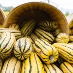 squash pumpkin in barrel