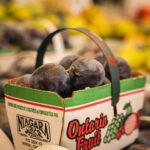 Ontario plums in crate
