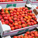 cauli-one brand farm fresh strawberries