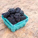 ontario blackberries